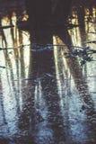 Überfluten Sie, Reflexion von Bäumen im Wasser lizenzfreies stockbild