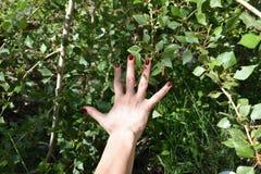 Übergeben Sie Ansicht mit rotem Nagellack auf Grünpflanzehintergrund Stockbilder
