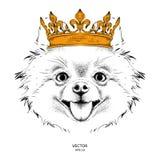 Übergeben Sie Bild-Porträthund des abgehobenen Betrages in der Krone Vektorillustration des Handabgehobenen betrages Lizenzfreie Stockfotografie