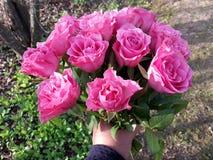 Übergeben Sie das Angebot eines Blumenstraußes der rosa Rosen, draußen Stockfoto