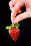 Übergeben Sie das Anhalten einer Erdbeere. Stockfotos