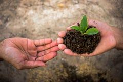 Übergeben Sie das, das wenn Sie Baum verwendet wird, pflanzen Lizenzfreies Stockfoto
