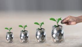 Übergeben Sie das Einsetzen einer Münze in ein Glas, das eine wachsende Anlage stockfotos
