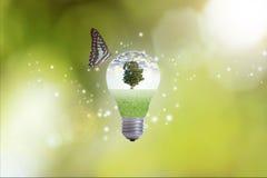 Übergeben Sie das Halten der Glühlampe gegen Baum mit Schmetterling Lizenzfreie Stockfotos