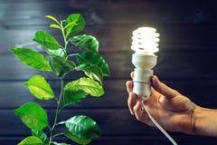 Übergeben Sie das Halten der Glühlampe nahe bei dem grünen Baum Stockbilder
