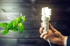 Übergeben Sie das Halten der Glühlampe nahe bei dem grünen Baum Stockfoto