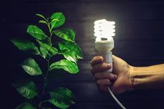 Übergeben Sie das Halten der Glühlampe nahe bei dem grünen Baum Stockfotografie