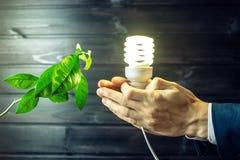 Übergeben Sie das Halten der Glühlampe nahe bei dem grünen Baum Lizenzfreies Stockfoto