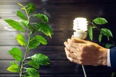 Übergeben Sie das Halten der Glühlampe nahe bei dem grünen Baum Lizenzfreie Stockfotos