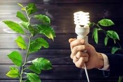 Übergeben Sie das Halten der Glühlampe nahe bei dem grünen Baum Stockfotos