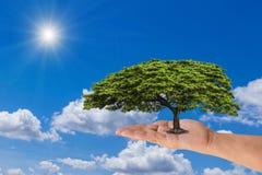 Übergeben Sie das Halten des grünen Baums mit blauem Himmel mit Sonnenlicht Stockfotos