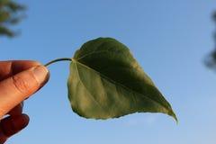 Übergeben Sie das Halten des grünen Blattes, Hintergrund des blauen Himmels Lizenzfreie Stockfotos