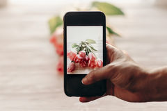 Übergeben Sie das Halten des Telefons, das Foto von stilvollen Blumen, rosa Tulpen macht Lizenzfreie Stockbilder
