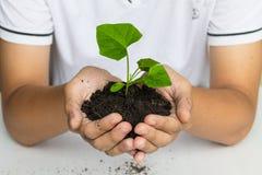 Übergeben Sie das Halten eines Baums für das Geben des Lebens zur Erde Stockfotos