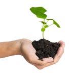 Übergeben Sie das Halten eines Baums für das Geben des Lebens zur Erde Lizenzfreies Stockbild