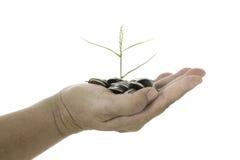 Übergeben Sie das Halten eines jungen Baums, der auf Münzen auf weißem Hintergrund wächst Stockfotografie