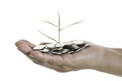 Übergeben Sie das Halten eines jungen Baums, der auf Münzen auf weißem Hintergrund wächst Lizenzfreie Stockfotografie