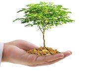 Übergeben Sie das Halten eines jungen Baums, der auf Münzen wächst Stockfotografie