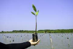 Übergeben Sie das Halten und das Pflanzen des neuen Baums mit grünem Wasser und blauem Himmel Lizenzfreies Stockbild