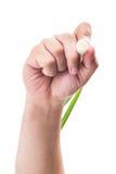 Übergeben Sie das Halten und das Schreiben mit einer grünen Frühlingszwiebel Lizenzfreies Stockfoto