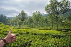 Übergeben Sie das Zeigen des Daumens oben auf dem Hintergrund von Teeplantagen Indien, Munnar, Kerala Stockbilder