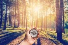 Übergeben Sie den Mann, der Kompass am Lärchenwald mit Sonnenlicht hält stockfotos