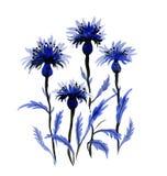 Übergeben Sie die gezogenen schönen Wildflowers, die auf weißem Hintergrund lokalisiert werden Lizenzfreies Stockbild