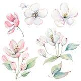 Übergeben Sie gezogene Apfelbaumaste und Blumen, blühenden Baum Lizenzfreies Stockfoto