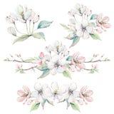 Übergeben Sie gezogene Apfelbaumaste und Blumen, blühenden Baum Stockbilder