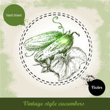 Übergeben Sie gezogene frische ganze Gurken mit Blatt und Blume Weinleseskizzenart organisches eco Gemüse Lizenzfreie Stockfotos