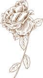 Übergeben Sie gezogene Rose Stockbild
