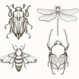 Übergeben Sie gezogene Stich Skizze der Scarabäus-Käfer-, Mai-Wanze, der Biene und des D Lizenzfreie Stockbilder