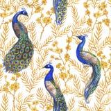 Übergeben Sie gezogenem Aquarell nahtloses Muster mit chinesischen Pfaus und goldenen Kirschblüte-Anlagen Lizenzfreie Stockfotografie