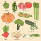 Übergeben Sie gezogenen Gemüseillustrations-Vektor - Artischocke, Erbse, Tomate, Spargel, Mais, Kürbis, Brokkoli Lizenzfreie Stockbilder