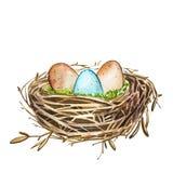 Übergeben Sie gezogenes Aquarellkunst-Vogelnest mit Eiern, Ostern-Design Abbildung auf weißem Hintergrund Stockbild