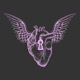 Übergeben Sie gezogenes elegantes anatomisches menschliches Herz mit Flügeln und Schlüsselloch, Lizenzfreies Stockfoto
