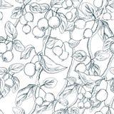 Übergeben Sie gezogenes nahtloses Muster mit Paradies aplple Zweigen in der Zwischenlage auf einem weißen Hintergrund Grafischer  stock abbildung