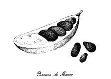 Übergeben Sie gezogenes von Banana de Macaco Fruits auf weißem Hintergrund Stockbild
