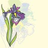 Übergeben Sie gezogenes Weinlese irise auf einem hellgelben Hintergrund Stockfotos