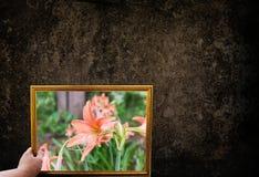 Übergeben Sie GriffBilderrahmen von Blumen in der Natur und in dunklem Schmutz, die wal sind Stockfoto