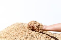 Übergeben Sie Griffungeschälten Reis auf dem weißen Hintergrund Stockfotografie