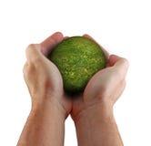 Übergibt Kugel des grünen Grases lizenzfreie stockfotografie