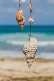 Überholter Baum mit Muscheln auf dem Strand von Isla Mujeres, Mexiko Stockfotos