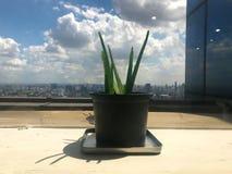 Überleben Sie auf dem Gebäude mit Sonnenschein Stockfotos