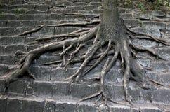 Überleben von Bäumen in der Stadt Abfallspeicherauszug im Wald Stockfoto