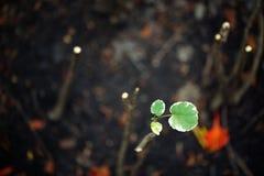 Überlebender in getrocknetem Land, grüner Schössling im Schwarzen stockfotos