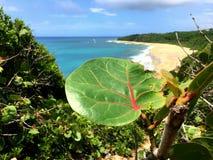 Überlebens-Strand Lizenzfreies Stockfoto