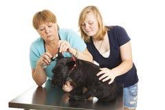 Überprüfung am Tierarzt Stockfotos