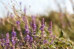 Überraschend schöner bunter Blumenhintergrund lizenzfreie stockfotos