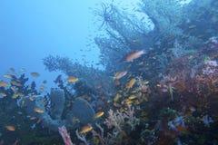 Überraschende Coral Reef Life und Verschiedenartigkeit weg von der Feldgeistlichen Burgos, Leyte, Philippinen stockfoto